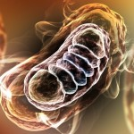 Huntington's disease and mitochondrial dysfunction