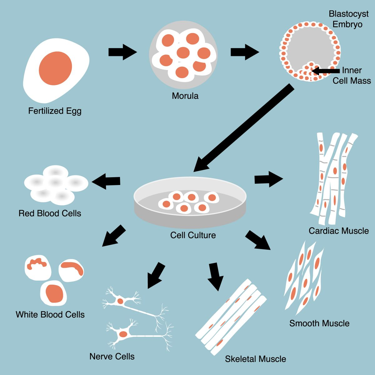 Low-Dose Irradiation Enhances Gene-Editing in Human Pluripotent Stem Cells