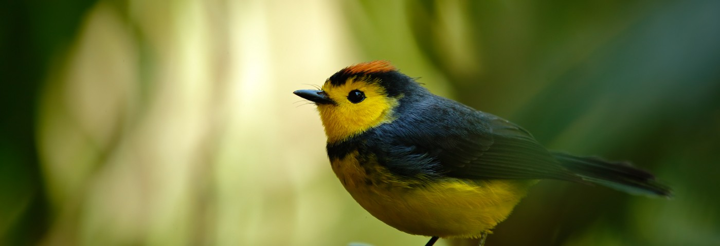 Huntington's Pathology Seen in Songbirds' Neuronal and Behavioral Response to HTT Mutation