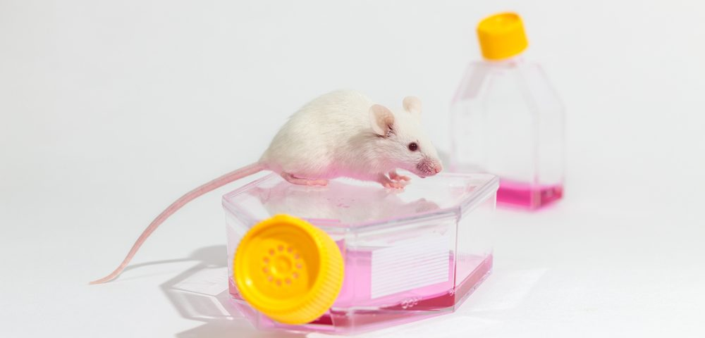 Mutated Protein in Huntington's Patients Can Be Transplanted, Grown in Healthy Animal Cells