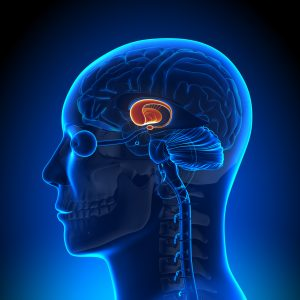 New Model of Specific Brain Region Might Lead to Better Huntington's Disease Treatment