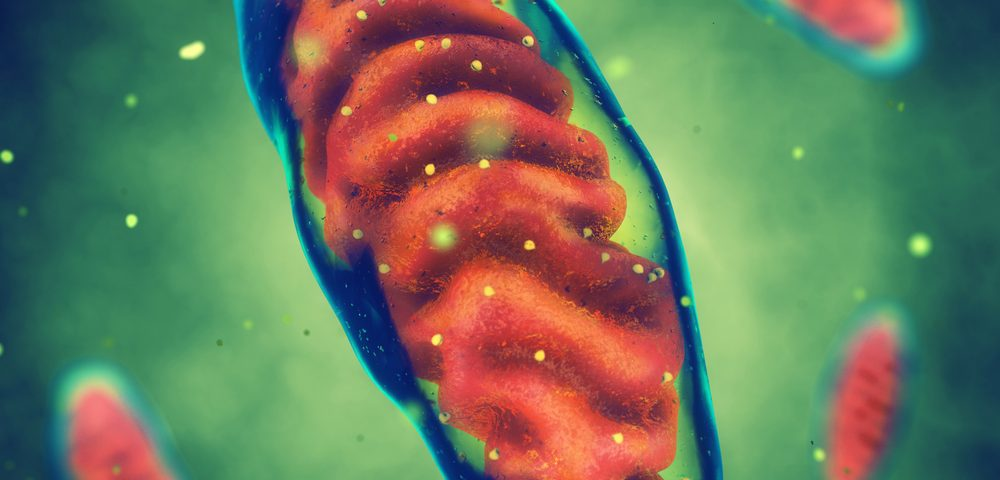 Mitochondrial Energy Processes in Huntington's May Be Normal After All