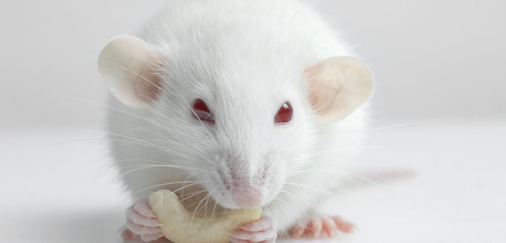 Metformin Reversed Symptoms Associated with Huntington's Disease in Mouse Study