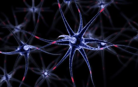 Brain Neurons Disconnect from Each Other in Process Called Neuritosis, Mouse Study of Huntington's Reveals