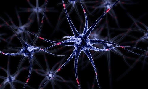 Tracking Nerve Cells' Signaling-protein Delivery Is Shedding Light on Huntington's