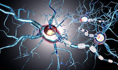 Genes Involved in Inflammation, Cellular Structure May Be Therapeutic Targets in Huntington's