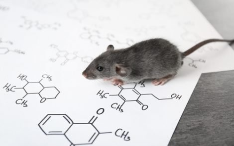 Strict Diet Control in Mouse Study Seen as Potential Huntington's Disease Therapeutic Approach