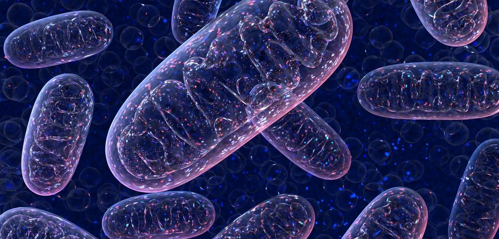 Image result for mitochondria HD