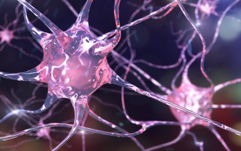 Impaired Glial Cell Development Contributes To Huntington's, Mouse Study Suggests