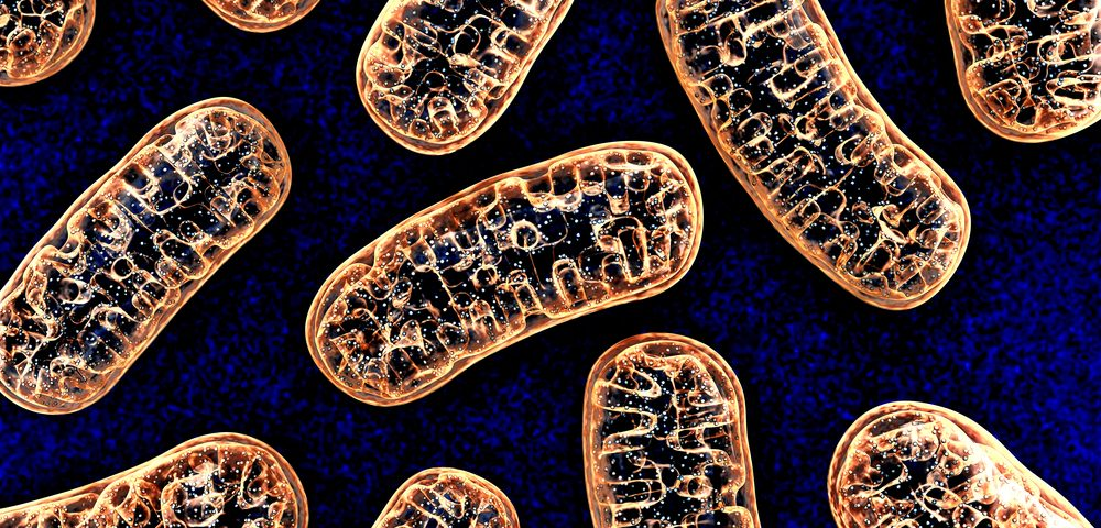 Iron Buildup in Mitochondria of Brain Cells May Promote Huntington's Progression