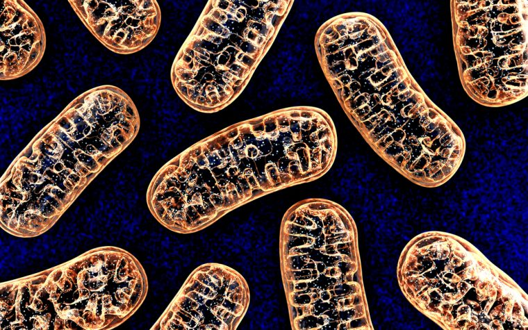 mitochondria and disease
