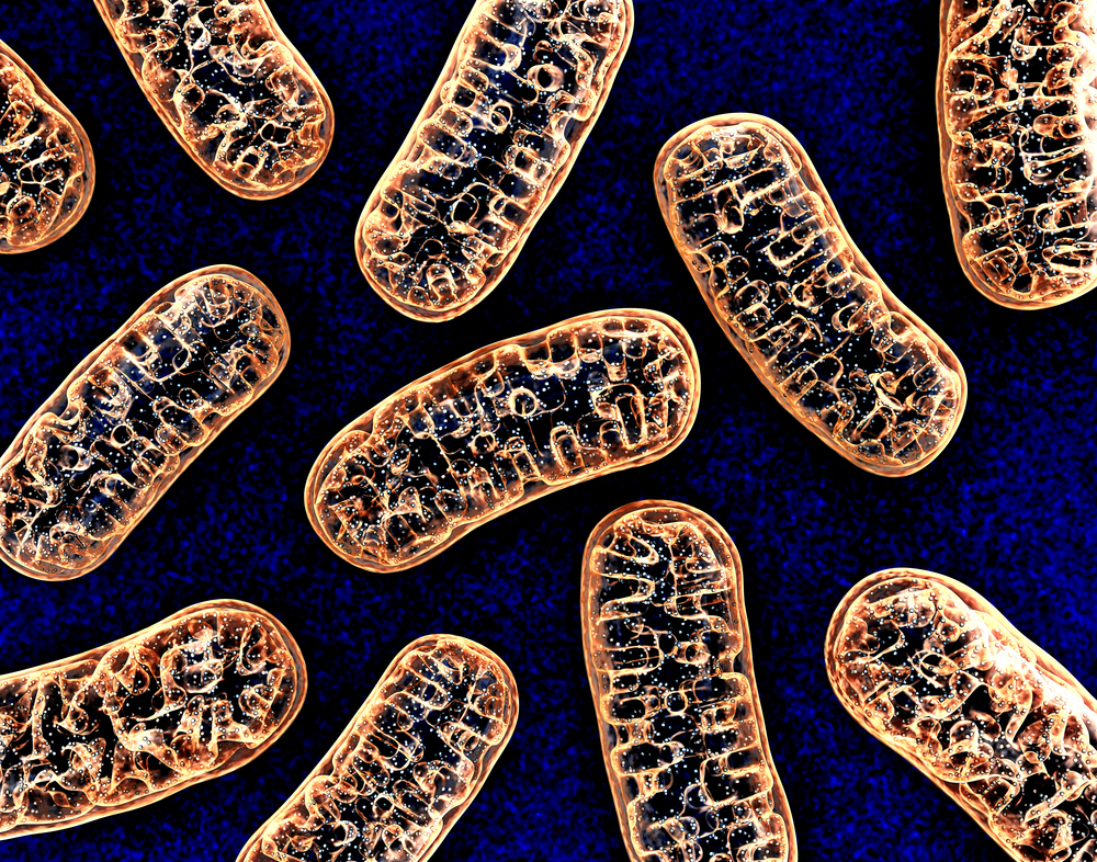 Microprotein of Mitochondria Helps Regulate Protein Folding and Cell Stress Linked to Disease, Study Finds