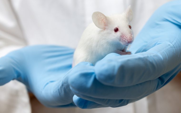 New Small Molecule AZ67 May Help Prevent Brain Cell Death, Early Data Show