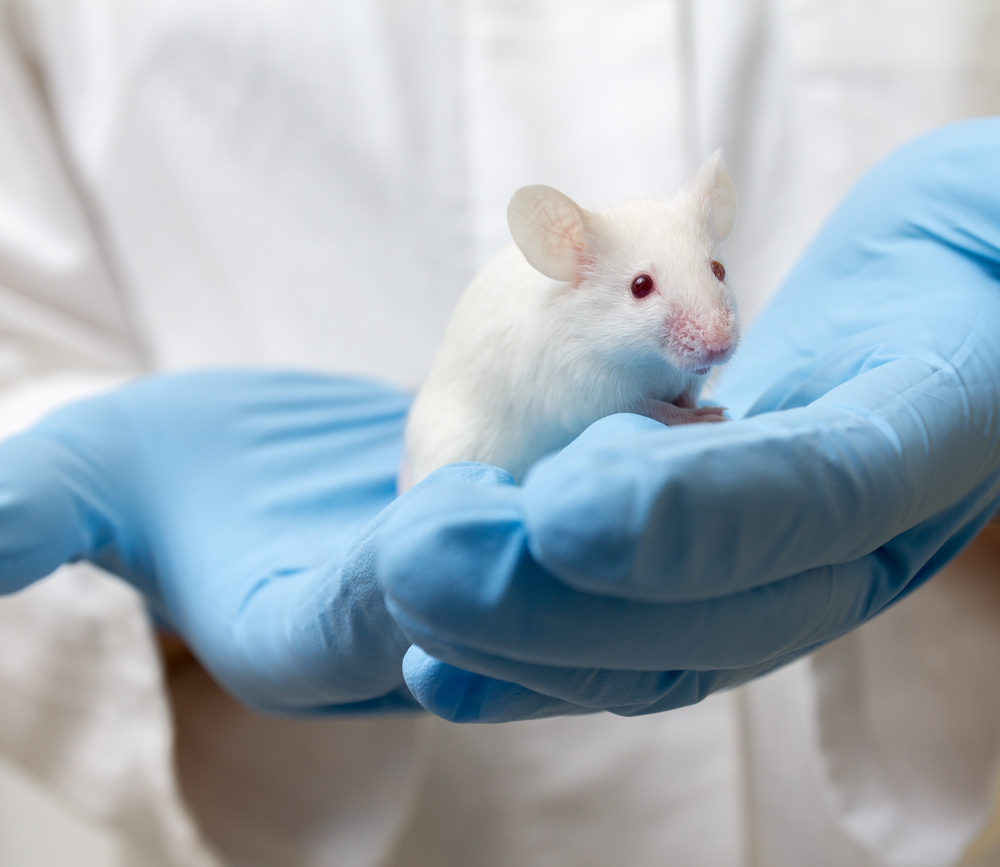 Retrotope's RT001 Reduced Cognitive Defects in Mice with Huntington's Disease, Study Shows