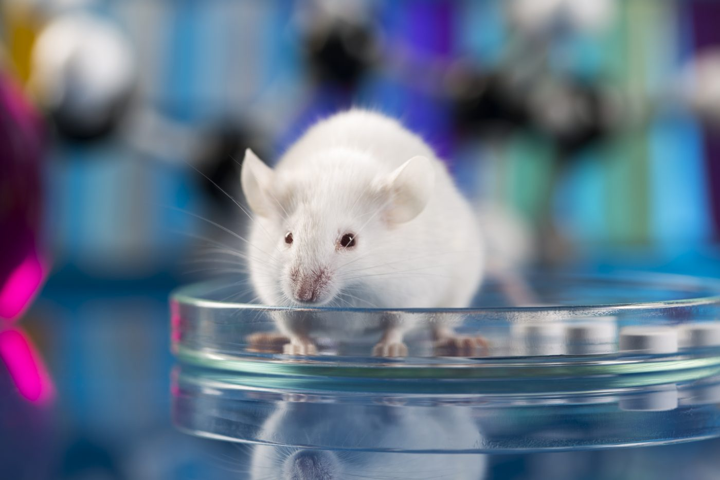 Gene Therapy Reprograms Brain Cells in Mouse Model, Improves Motor Function